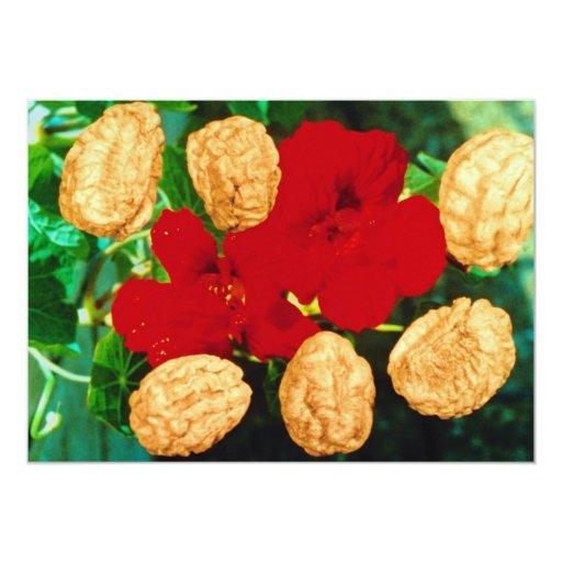 La capuchina roja siembra (las flores del majus invitación personalizada