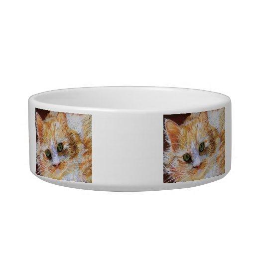 La cara anaranjada del gato añade su cuenco de tazones para comida para gato