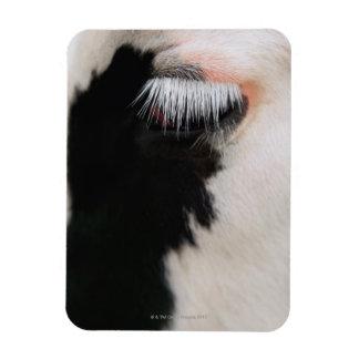 La cara de la vaca de Holstein, primer del ojo Imanes Flexibles