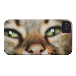 La cara de un gato iPhone 4 cárcasas