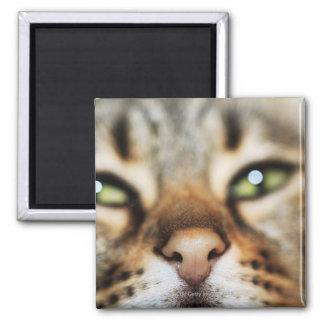 La cara de un gato imán cuadrado