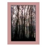 La catedral de la foto inspiradora del bosque postales