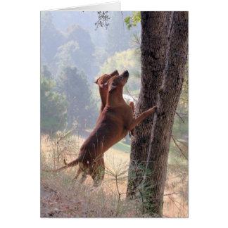 La caza de la ardilla tarjeta de felicitación