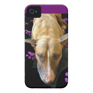 La cebada 4s del iPhone 4 de bull terrier del ingl Case-Mate iPhone 4 Cárcasas