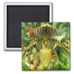 La cebra amarilla raya la orquídea iman de nevera