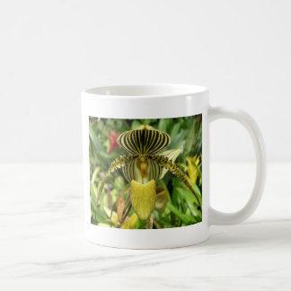 La cebra amarilla raya la orquídea taza
