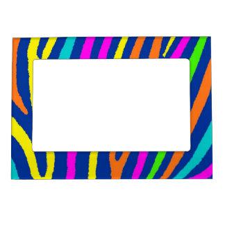 La cebra brillante de neón raya el marco de la fot marcos magnéticos para fotos