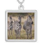 La cebra de Burchell, burchellii del Equus, Masai Colgante Cuadrado