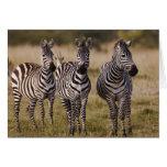 La cebra de Burchell, burchellii del Equus, Masai  Tarjeta De Felicitación