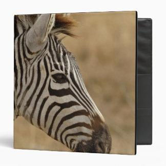 """La cebra de Burchell, burchellii del Equus, Ngoron Carpeta 1 1/2"""""""