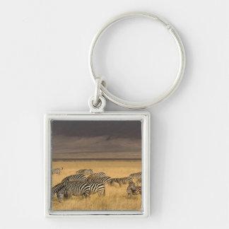 La cebra de Burchell, burchellii del Equus, Ngoron Llaveros