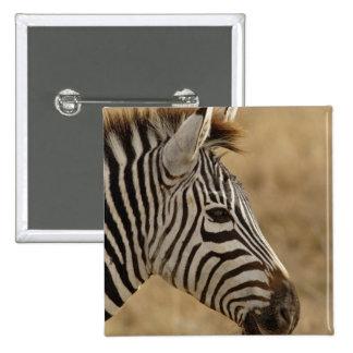 La cebra de Burchell, burchellii del Equus, Ngoron Pin Cuadrada 5 Cm