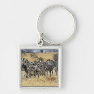 La cebra de Burchell, burchellii del Equus, Tarang Llaveros