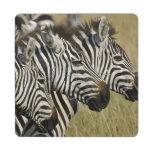 La cebra de Burchelli, burchellii del Equus, Masai