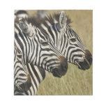 La cebra de Burchelli, burchellii del Equus, Masai Blocs De Notas