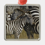 La cebra de Burchelli, burchellii del Equus, Masai Adorno