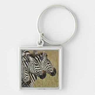 La cebra de Burchelli, burchellii del Equus, Masai Llavero Personalizado
