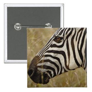 La cebra de Burchelli, burchellii del Equus, Masai Pin
