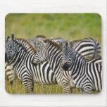 La cebra de Burchelli, burchellii del Equus, Masai Mouse Pad