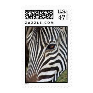 La cebra del buhonero timbres postales