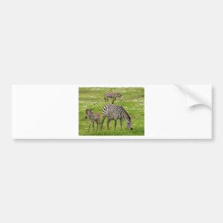 La cebra raya destino africano de la naturaleza de pegatina para auto