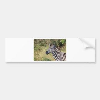 La cebra raya el destino africano animal del safar pegatina para auto