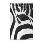 La cebra raya la lona negra y blanca abstracta