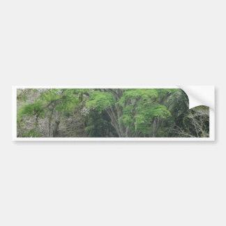 La Ceiba Tree at Las Ruinas de Copan Bumper Sticker