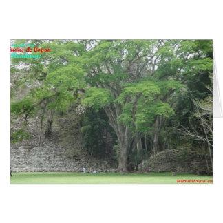 La Ceiba Tree at Las Ruinas de Copan Card
