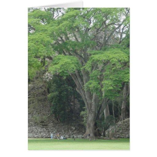 La Ceiba Tree at Las Ruinas de Copan Cards