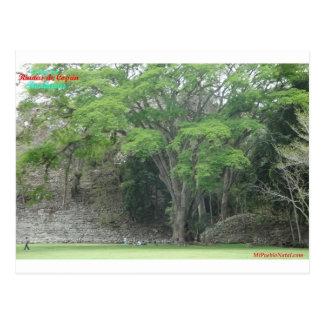 La Ceiba Tree at Las Ruinas de Copan Postcard