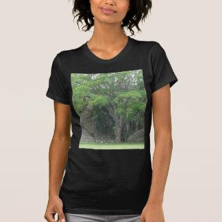 La Ceiba Tree at Las Ruinas de Copan T Shirt