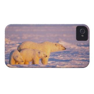 La cerda del oso polar con la primavera pare en el iPhone 4 Case-Mate funda