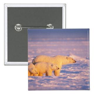 La cerda del oso polar con la primavera pare en el pin cuadrada 5 cm