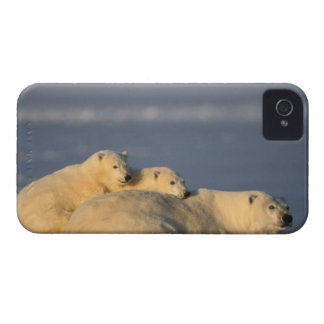 La cerda del oso polar que se acuesta con la prima