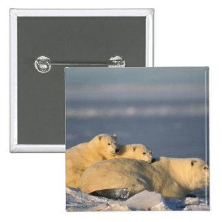 La cerda del oso polar que se acuesta con la prima pin cuadrada 5 cm