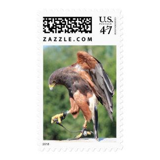 La cetrería, Jessed Harris Hawk Timbres Postales