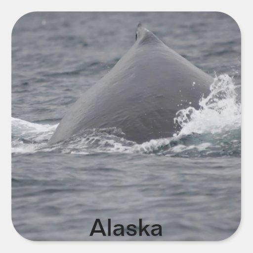 la chepa de la ballena jorobada pegatina