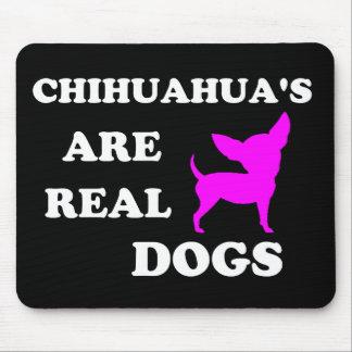 La chihuahua es perros reales tapetes de raton