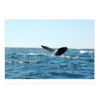 La cola de la ballena tarjetas postales