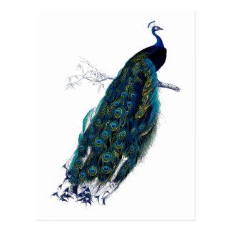 La colección del pavo real postal