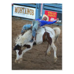 La colección del rodeo - paseo salvaje tarjetas postales