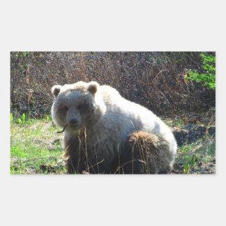 La comida campestre del oso de peluche pegatina