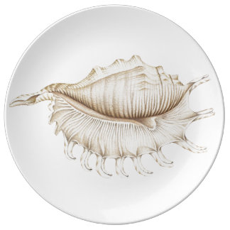 La concha Shell de la araña en porcelana del lápiz Platos De Cerámica
