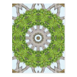 La corteza sale del arte de piedra 6 del caleidosc tarjeta postal