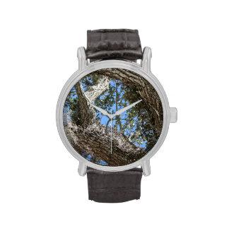la corteza y el cielo del roble vivo ven la fotogr relojes de mano