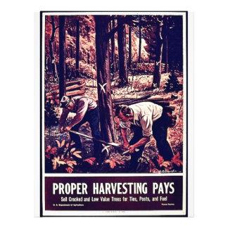 La cosecha apropiada paga tarjetas informativas