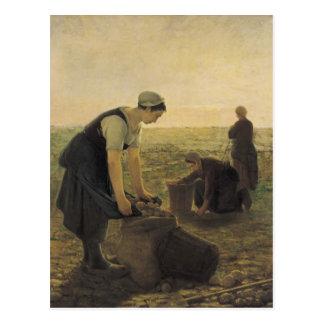 La cosecha de la patata postal