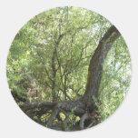 La creación de la naturaleza etiqueta redonda