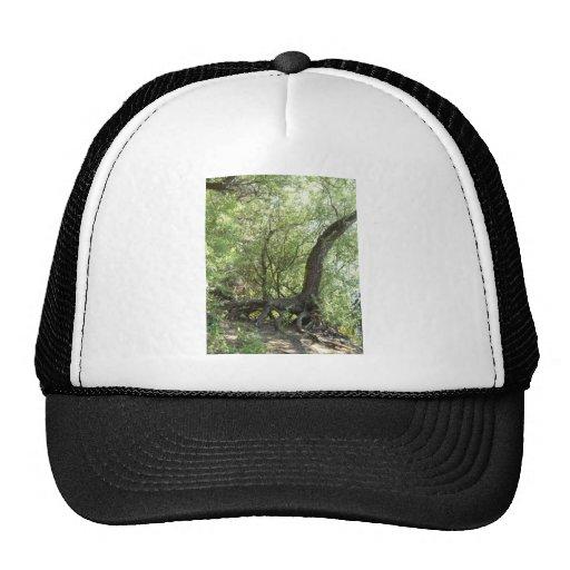 La creación de la naturaleza gorra